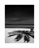 Palm shadow01